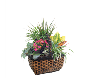 Zurich Wicker Garden in Detroit and St. Clair Shores MI, Conner Park Florist
