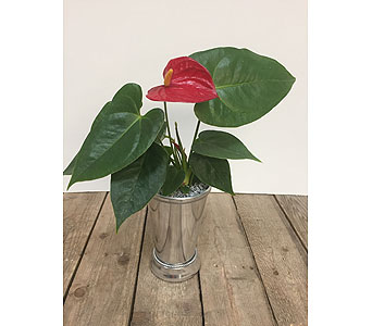 Fancy Anthurium in Saskatoon SK, Bill's House of Flowers