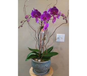 Magnificent Orchid  in Tampa FL, Buds, Blooms & Beyond