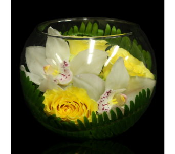 Canary Rose and Orchid Bowl in Boston MA, Stapleton Floral