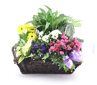 European Garden Grande in Spartanburg SC, A-Arrangement Florist