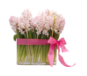 Hyacinth Happiness in Little Rock AR, Tipton & Hurst, Inc.
