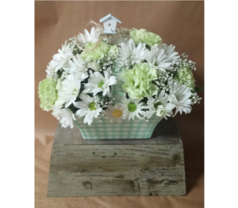 Gingham Daisy Basket in Edmonds WA, Dusty's Floral