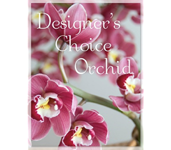 Designer's Choice Orchid Plant in Holladay UT, Brown Floral