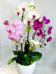 Pure Orchids in West Los Angeles CA, Sharon Flower Design