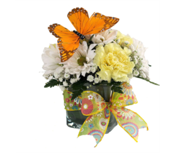 Spring Butterfly Cube Bouquet in Southfield MI, Thrifty Florist
