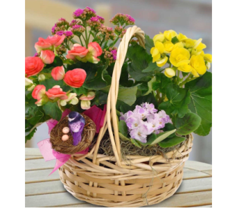 Blooming Garden in Needham MA, Needham Florist