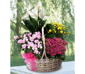 Custom in Needham MA, Needham Florist