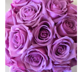Premium Mauve Roses in Ajax ON, Reed's Florist Ltd