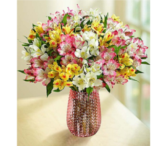 Spring Peruvian Lilies: 50 Blooms in Huntington WV, Archer's Flowers and Gallery