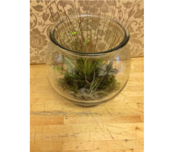 Air Plant Terrarium in Toronto ON, The Flower Nook