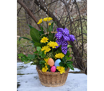 Hello Easter Planter in Indianapolis IN, Gillespie Florists
