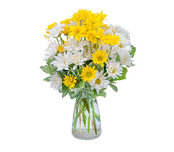 Dazed Daisies in Moline IL, K'nees Florists