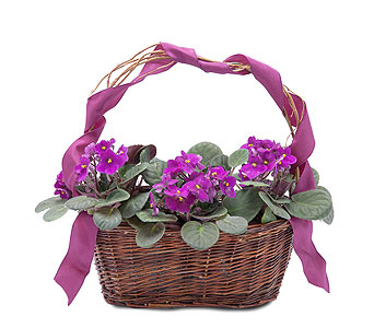 Very Violet Basket in Richland WA, Buds...and Blossoms,Too