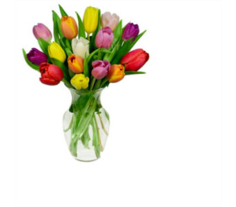Tulips in Voorhees NJ, Green Lea Florist