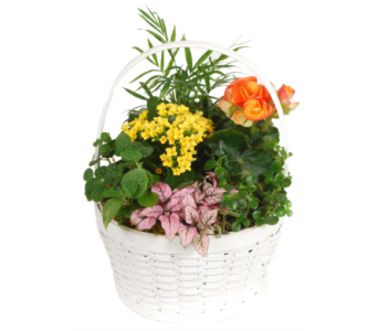 Euro Planter in a White Basket in Madison WI, Felly's Flowers