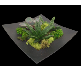 Square Succulent Dish Garden in Guelph ON, Patti's Flower Boutique