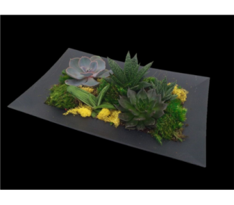 Rectangular Succulent Dish Garden in Guelph ON, Patti's Flower Boutique