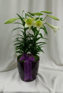 Easter Lily 8