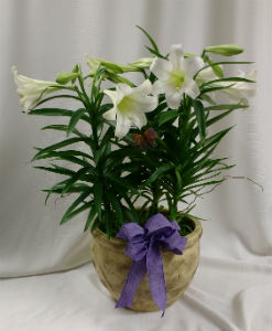 Easter Lily 10