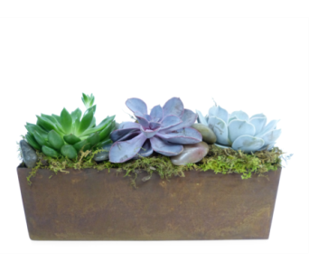 Copper Succulents by Bell Flowers Silver Spring in Silver Spring MD, Bell Flowers, Inc