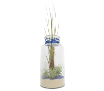 Apothecary Jar with Air Plants in Silver Spring MD, Bell Flowers, Inc