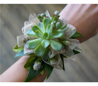 Succulent Corsage in Muskegon MI, Wasserman's Flower Shop