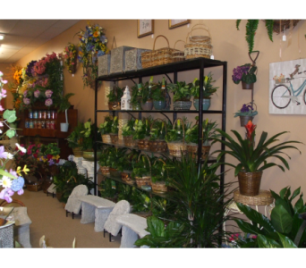 PLANTS AVAILABLE in Evansville IN, Cottage Florist & Gifts