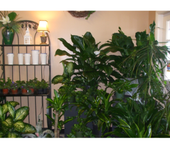 PLANTS in Evansville IN, Cottage Florist & Gifts