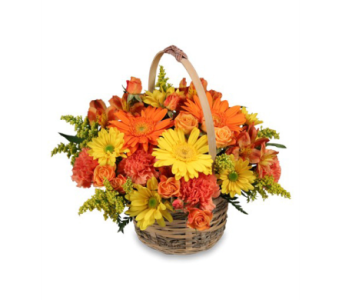 A Basket of Cheer  in Oviedo FL, Oviedo Florist