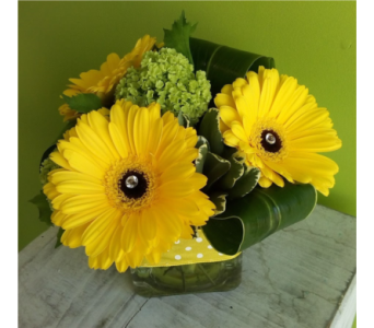 Yellow Gerbera Cube in Calgary AB, The Tree House Flower, Plant & Gift Shop
