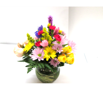 Daisy Garden Bowl in Worcester MA, Holmes Shusas Florists, Inc