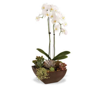 Orchid and Succulent Planter in Big Rapids MI, Patterson's Flowers, Inc.