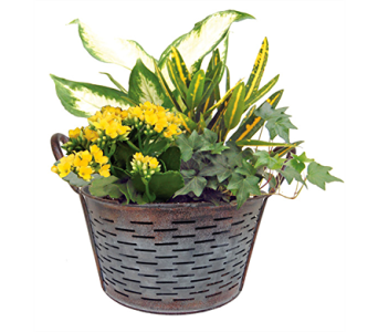 Olive Bucket Planter in St Catharines ON, Vine Floral