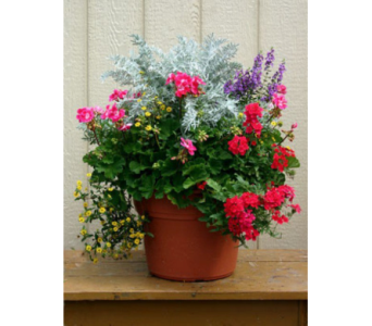 Mixed Planter in Mechanicville NY, Matrazzo Florist