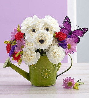 Playful Pup in Mount Morris MI, June's Floral Company & Fruit Bouquets