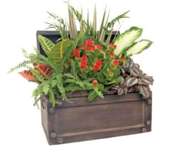 Large Treasure Chest in St Catharines ON, Vine Floral
