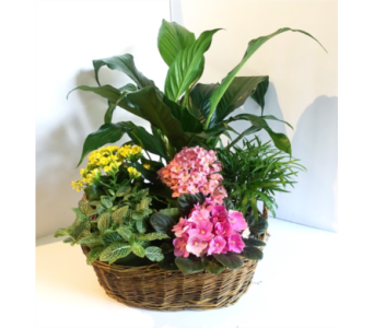 Traditional European Garden Basket in Tacoma WA, Blitz & Co Florist