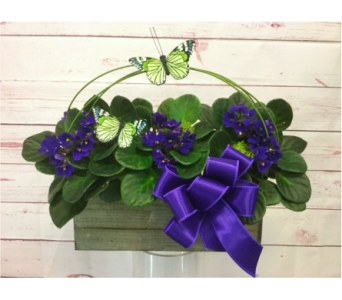 Farmhouse Violets in Wellington FL, Wellington Florist