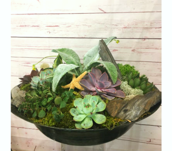 Seaside Succulent Garden in Wellington FL, Wellington Florist