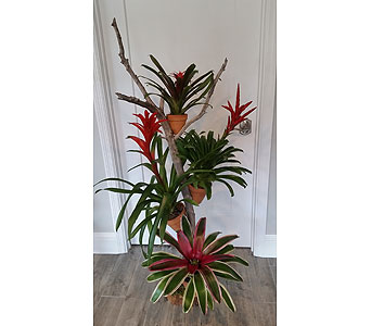 Tropical Tree in Bradenton FL, Ms. Scarlett's Flowers & Gifts