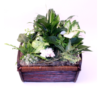 White Peace Basket Lg in Grimsby ON, Cole's Florist Inc.