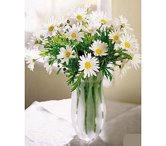 Vase of Daisies in New York NY, CitiFloral Inc.