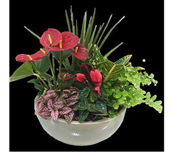 Anthurium Bowl in Corunna ON, KAY'S Petals & Plants