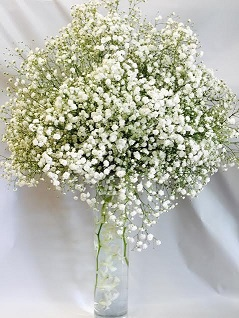 All White Baby's Breath in West Los Angeles CA, Sharon Flower Design
