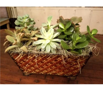 Ultimate Succulent Garden in Nashville TN, Emma's Flowers & Gifts, Inc.