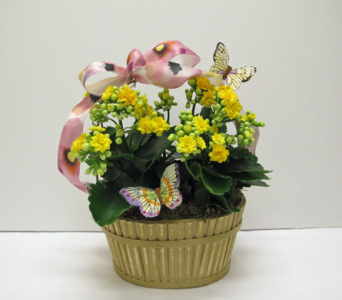 Butterflies and Calandiva in Amherst NY, The Trillium's Courtyard Florist