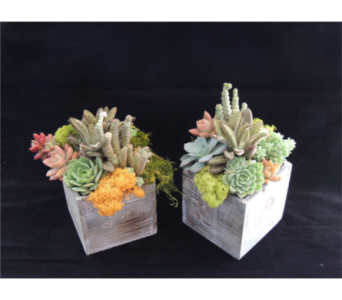 Succulent Garden  in Mitchell SD, Nepstads Flowers And Gifts
