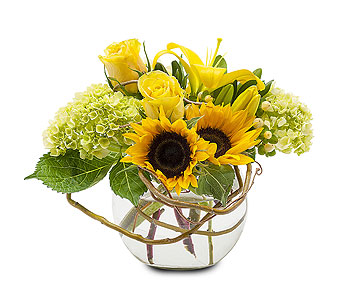Sunshine Rays in Spartanburg SC, A-Arrangement Florist