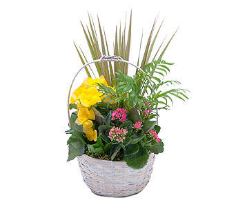 Bloomin' Sunshine Days Basket in Sapulpa OK, Neal & Jean's Flowers, Inc.